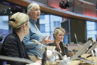 Interview with Jane Goodall, British primatologist | by European Parliament
