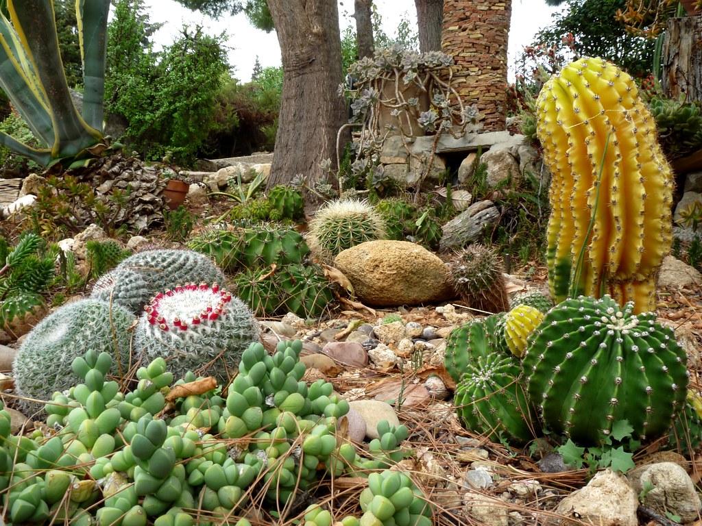 Giardino roccioso parte della mia collezione di cactus for Giardino 3d gratis italiano