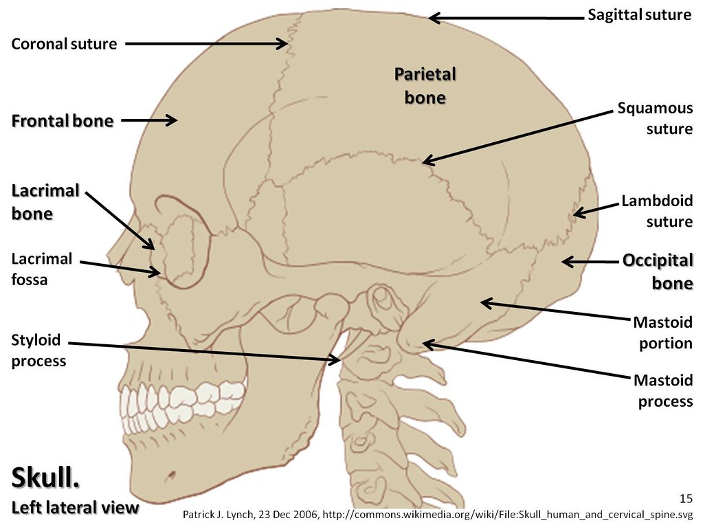 skull diagram lateral view with labels part 1 axial ske flickr. Black Bedroom Furniture Sets. Home Design Ideas