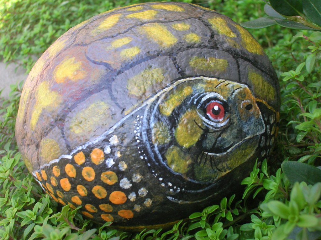 eastern box turtle painted on a rock kim flickr