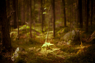 magic september forest #01 | by Pierre Pocs