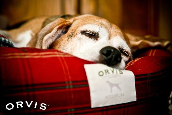 Lyme Disease in Dogs - Orvis News