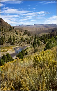 Sonora Pass Toiyabe National Forest CA | by Bettina Woolbright