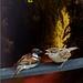Gubbi enjalu cover page for blog