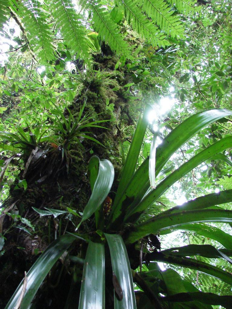 Monteverde costa rica jard n bot nico nacional vi a for Jardin botanico vina