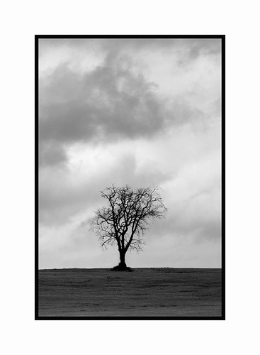 Sombre and Lonely Tree | by Magdalen Green Photography