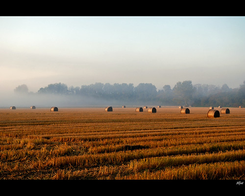Country view | by alfvet