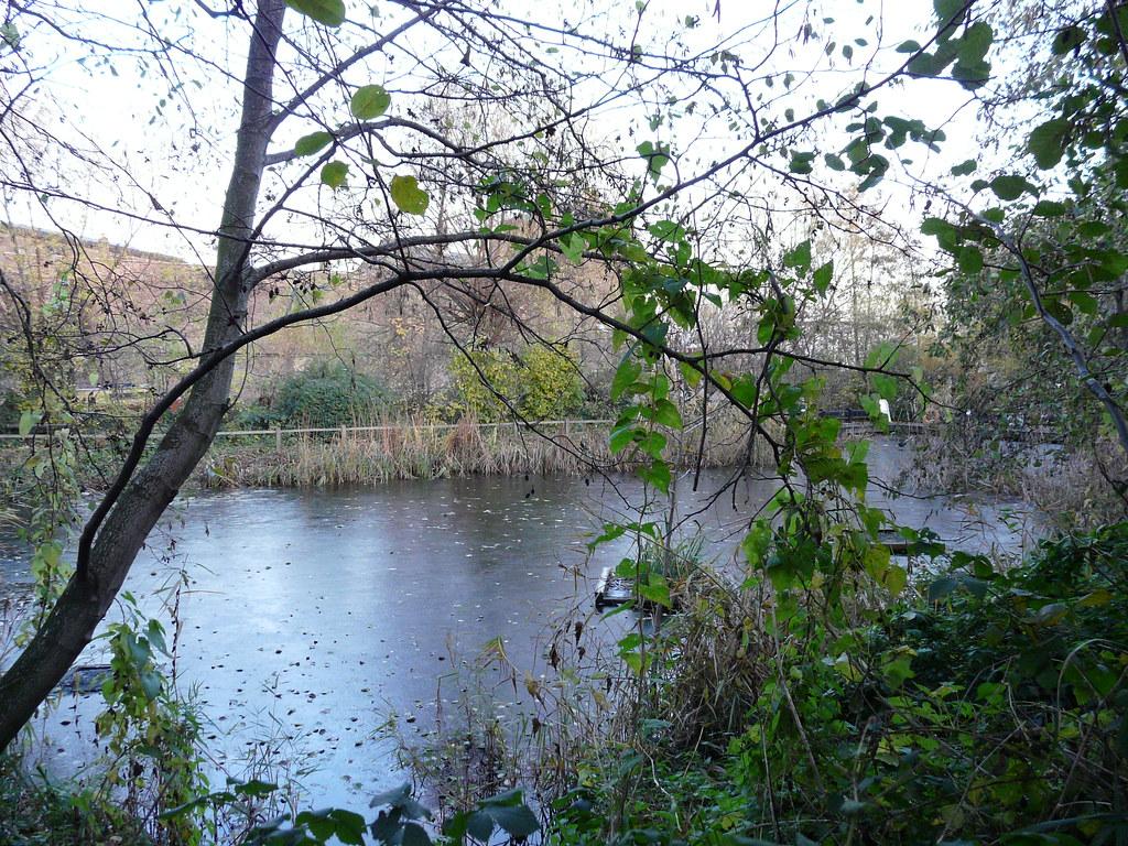 Camley Street Natural Park Entry Fee