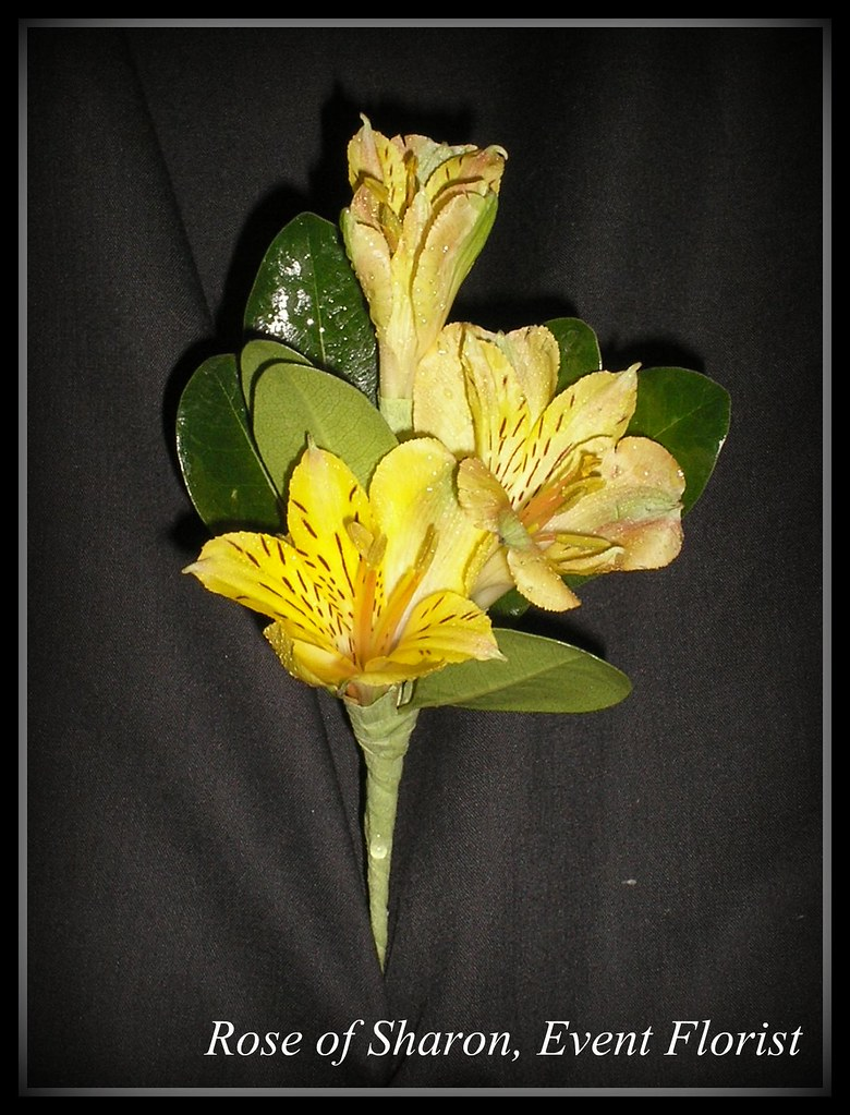 Boutonniere Yellow Alstroemeria Rose Of Sharon Floral Designs