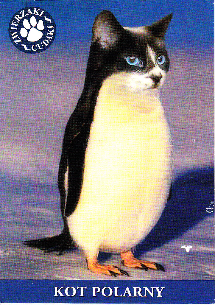 Cat 5 A Or B