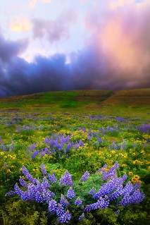 The Dalles Springtime Columbia Gorge | by kevin mcneal