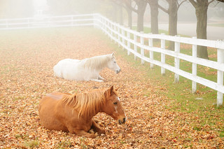 Horses in Fog | by Glooscap