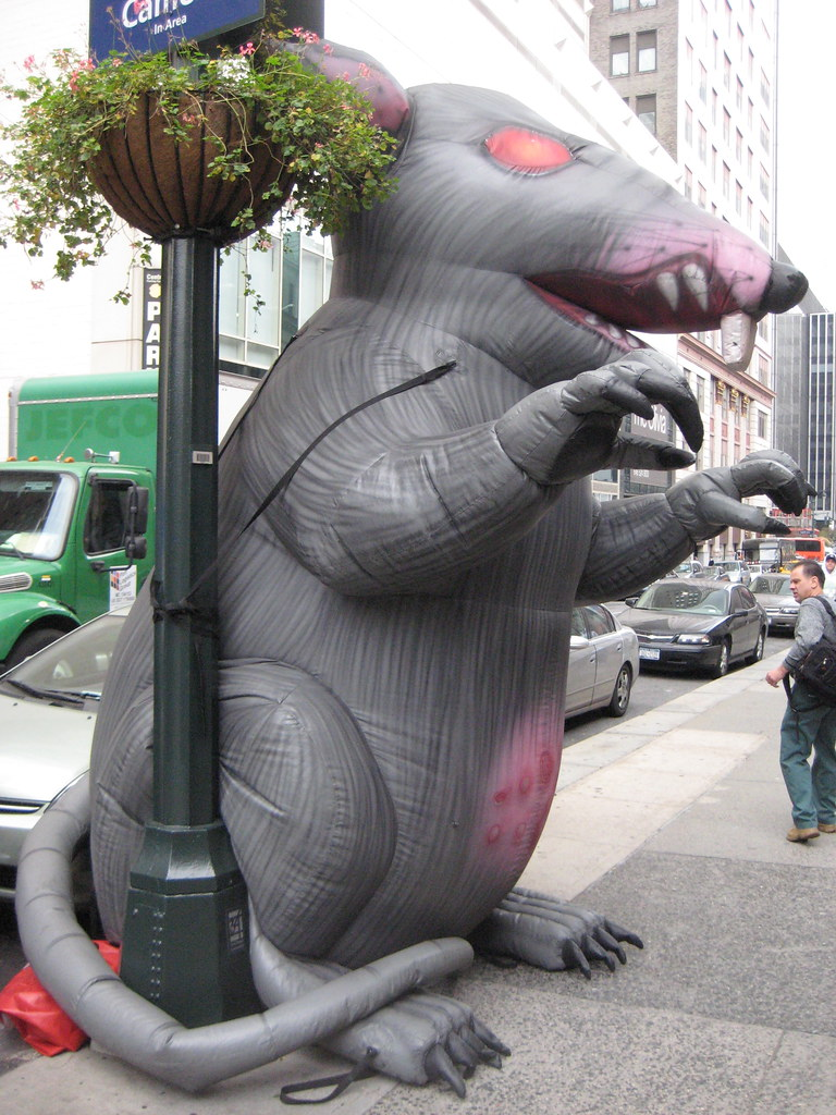 Image result for giant strike rat
