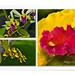 Borneon Orchids
