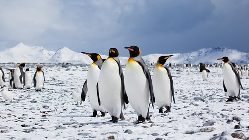 penguin group small | by Antarctica Bound