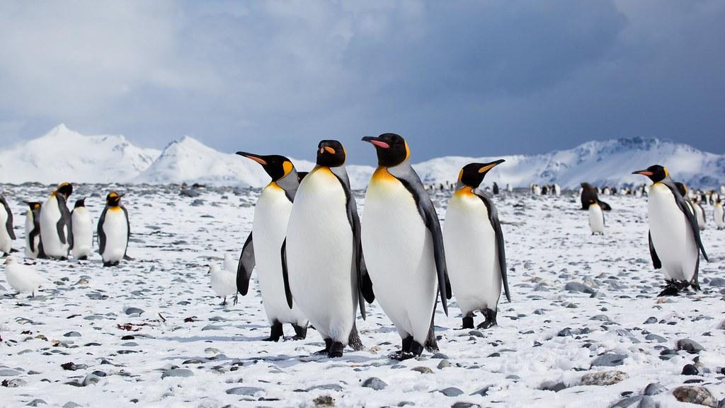 5 Activities to try only in Antarctica