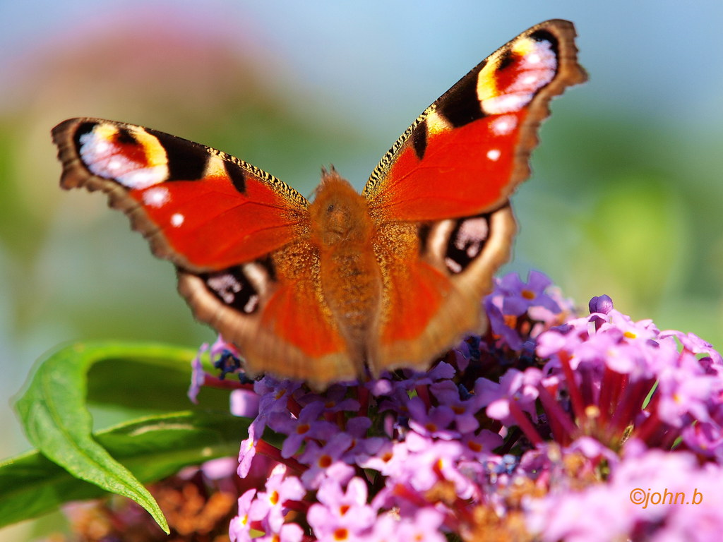 Colour my garden bit of flutter bye for How to get my photographs published