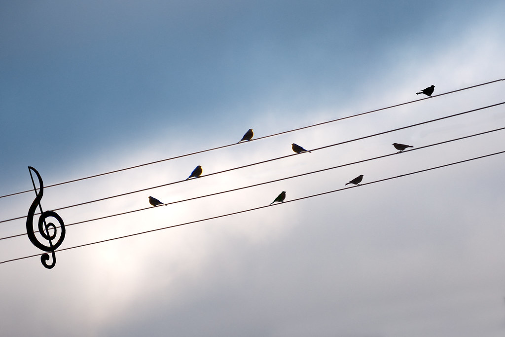 Bird On The Wire | Like a bird on the wire Like a drunk in t… | Flickr