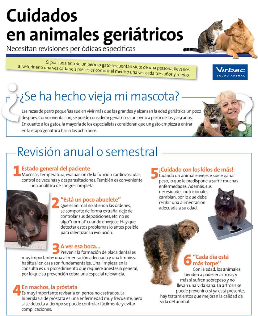 la torpeza del veterinario