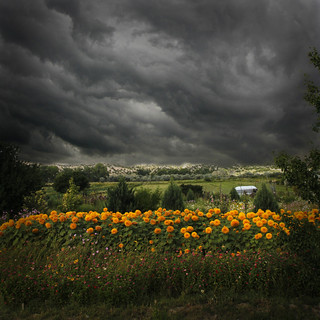 storm over sunflowers | by bob merco