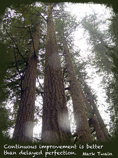 Tall Trees Continually Improve | by FindYourSearch