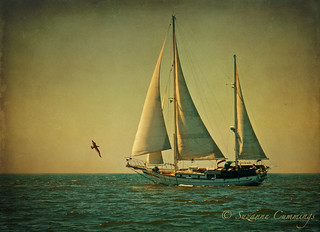 Ketch ya Later | by SLEEC Photos/Suzanne