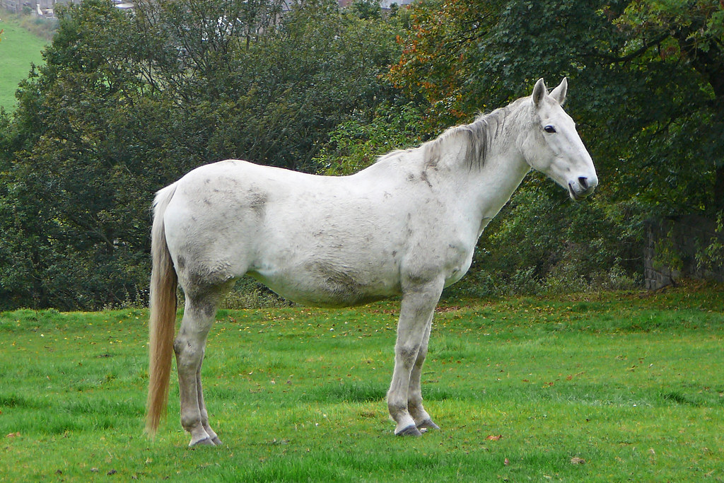 White Horse In The Rain Old Farnley Leeds Tim Green