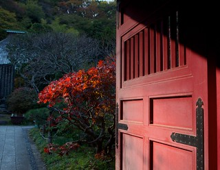 Red door red tree | by julesberry2001