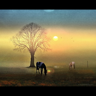 Horses in Morning Light | by h.koppdelaney