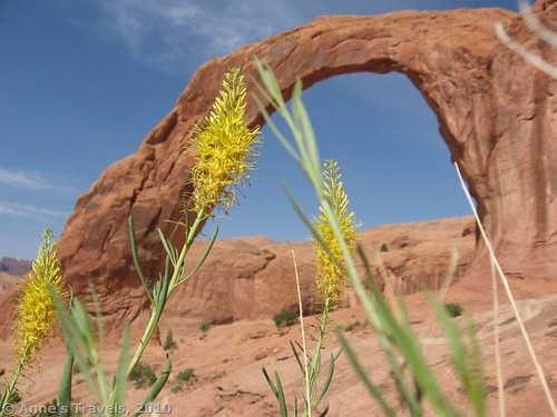 Spring wildflowers near Carona Arch, Moab
