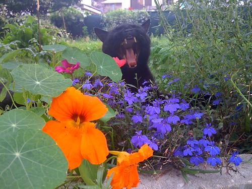 Cat Flower Garden Cafe