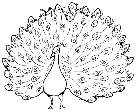 drawing dancing peacock 2 lineart by fuzzy_flowers