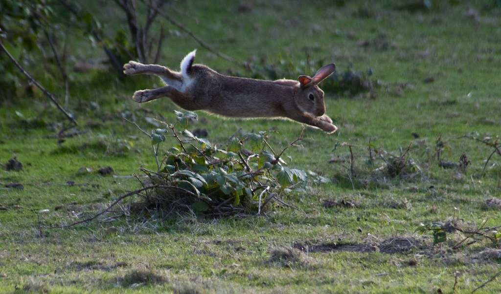 its just a jump to the left the joy of being rabbit