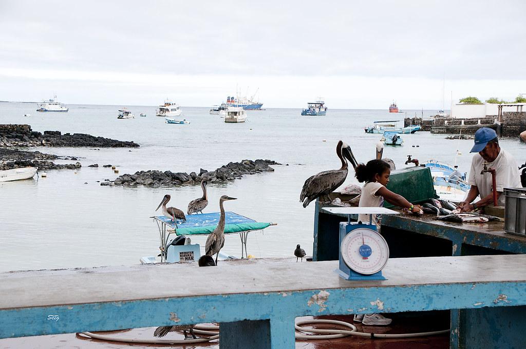 Fish market santa cruz 0169 fish market at santa cruz for Santa cruz fishing