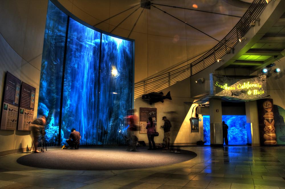 Image Result For Long Beach Aquarium