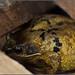 Frog In Hiding