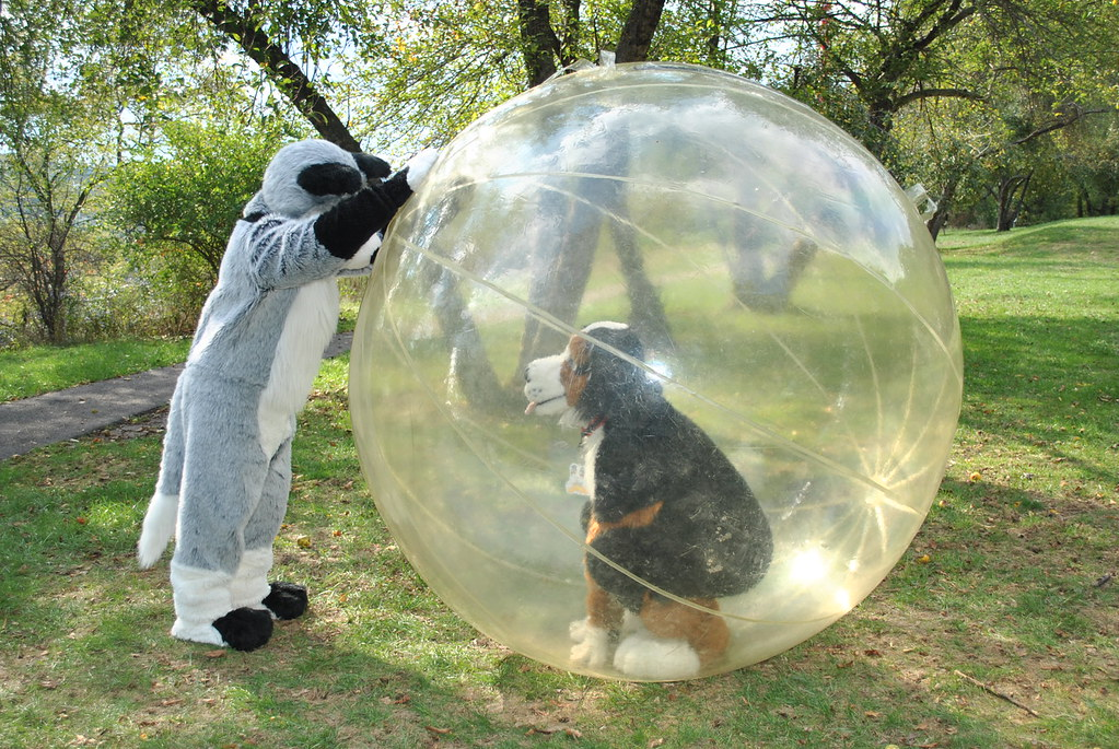 Fursuiter In A Giant Hamster Ball Douglas Muth Flickr