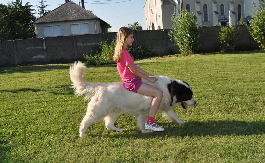 dog riding фото a