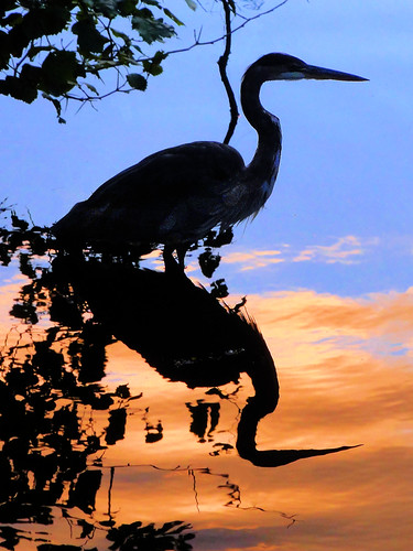 Heron at the Magic Hour | by brooksbos