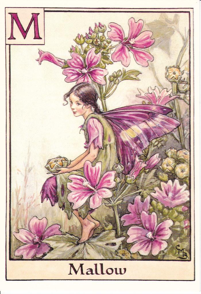 Mallow Flower Fairy Mallow Fairy Postcard