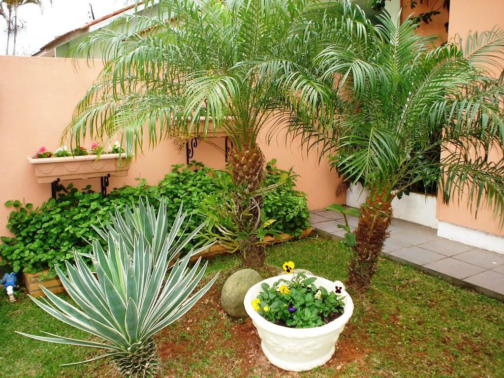 mini jardim mini jardim de quintal Yvone Pereira Flickr