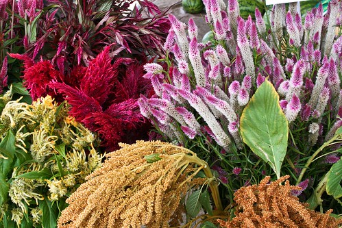 fall flowers at the Minneapolis Farmers Market | by Kim | Affairs of Living