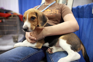 2010 AKC Meet the Breeds | by ccho