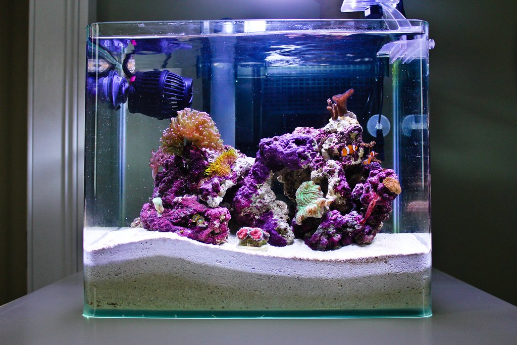 4 Gallon Pico Reef October 2010 Chris Blatchly Flickr