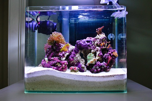4 gallon pico reef flickr photo sharing for Saltwater fish tank kit