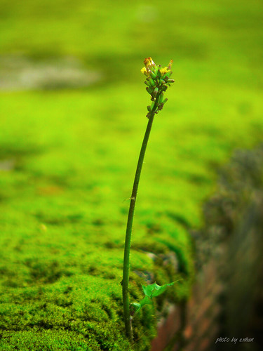 green - moss - leaves and flowers | by e.nhan
