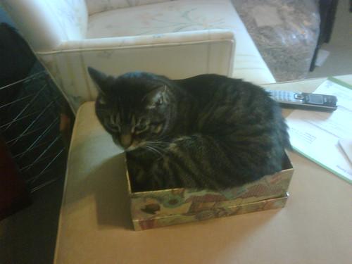 Best Cat Box Carriers