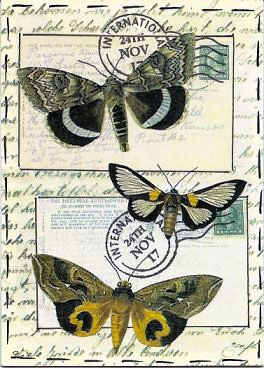 Moth - traded | by PaperScraps