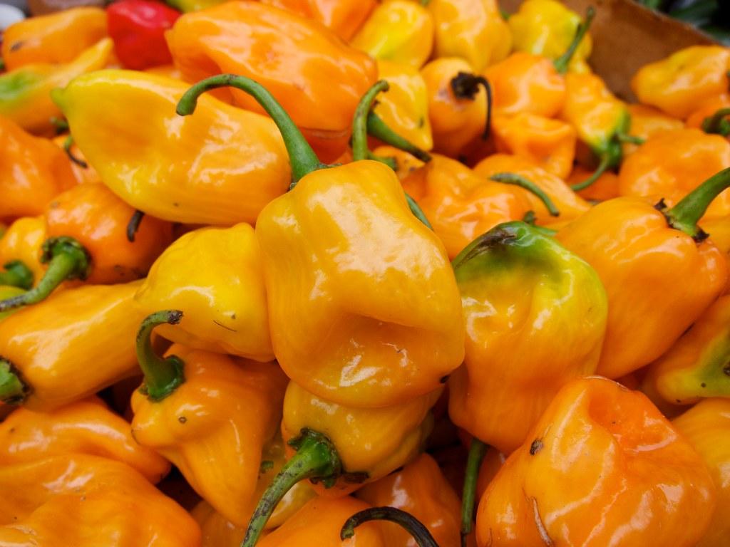 Hottest Pepper In The World List Orange Habanero Chili ...