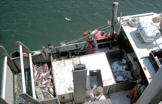 20100802 1158 cape cod fish market fishermen img for Cape cod fish market